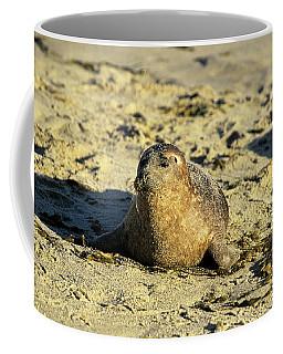 Baby Seal In Sand Coffee Mug