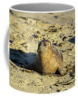 Baby Seal In Sand Coffee Mug