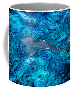 Baby Shark In The Turquoise Water. Production By Nature Coffee Mug