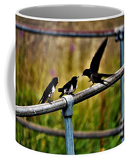 Baby Swallows Feeding Coffee Mug