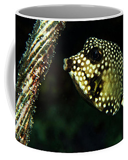 Coffee Mug featuring the photograph Baby Trunk Fish by Jean Noren