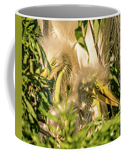 Coffee Mug featuring the photograph Baby White Egrets by Jane Luxton