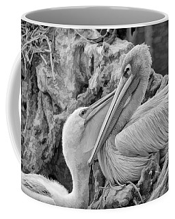 Baby White Pelican Talks To Mother White Pelican Coffee Mug