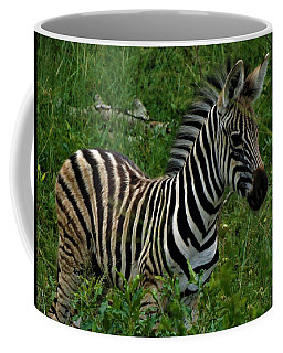 Baby Zebra  Coffee Mug