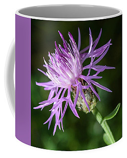Bachelor Button Coffee Mug