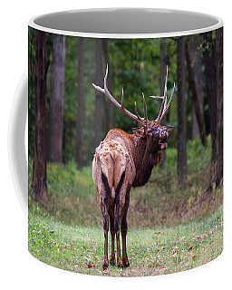 Coffee Mug featuring the photograph Back Off by Andrea Silies