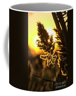 Coffee Mug featuring the photograph Backlit By The Sunset by Zawhaus Photography