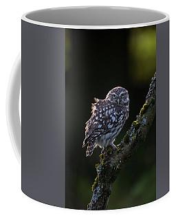 Backlit Little Owl Coffee Mug