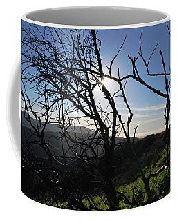 Coffee Mug featuring the photograph Backlit Trees Overlooking Hillside by Matt Harang