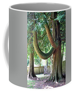 Backyard Cedar Coffee Mug
