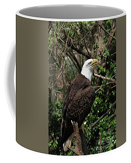 Bald Eagle #7 Coffee Mug
