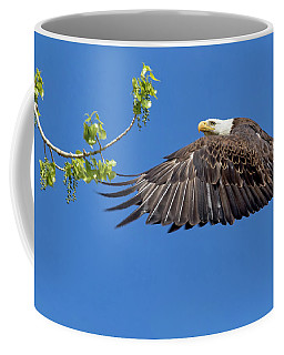 Bald Eagle In Flight 4-25-17 Coffee Mug