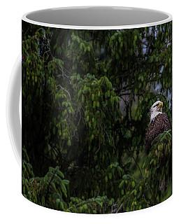 Bald Eagle In The Tree Coffee Mug by Timothy Latta