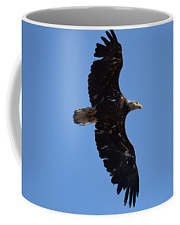 Bald Eagle Juvenile Soaring Coffee Mug