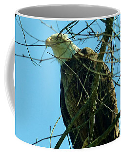 Coffee Mug featuring the photograph Bald Eagle Keeping Guard by Rosanne Licciardi