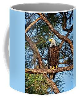 Bald Eagle Near Nest Coffee Mug by Ronald Lutz