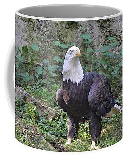 Bald Eagle Standing On The Ground Coffee Mug by DejaVu Designs
