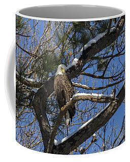 Bald Eagle Watching Her Domain Coffee Mug