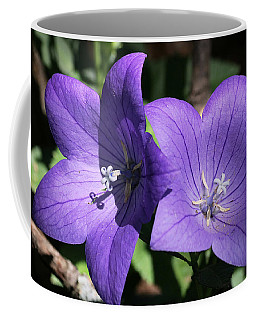 Coffee Mug featuring the photograph Balloon Flowers by Sheila Brown