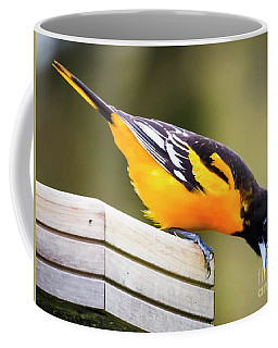 Baltimore Oriole About To Jump Coffee Mug