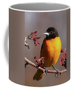 Baltimore Oriole II Coffee Mug
