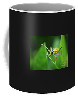 Coffee Mug featuring the photograph Bamboo Longhorned Beetle by Michelle Meenawong