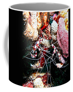 Banded Coral Shrimp - Caught In The Act Coffee Mug