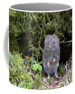 Coffee Mug featuring the photograph Bank Vole - Scottish Highlands by Karen Van Der Zijden