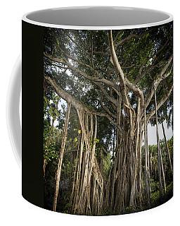 Coffee Mug featuring the photograph Banyan Tree At Bonnet House by Belinda Greb