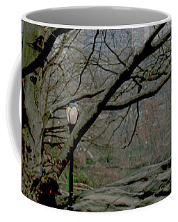 Coffee Mug featuring the photograph Bare Tree On Walking Path by Sandy Moulder