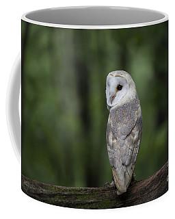 Barn Owl In The Woods 2 Coffee Mug