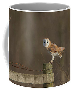 Barn Owl On Fence Coffee Mug