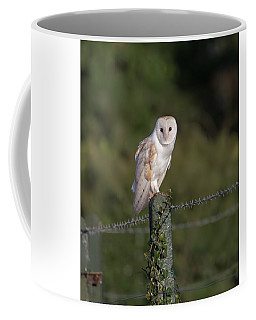Barn Owl On Ivy Post Coffee Mug
