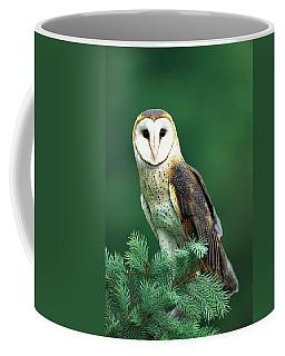 Barn Owl Tyto Alba Portrait, Hudson Coffee Mug