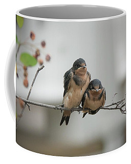 Barn Swallow Fledglings Coffee Mug