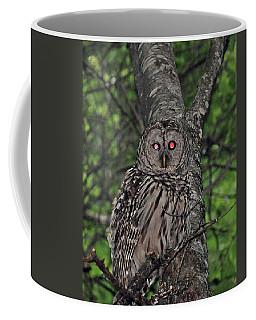 Barred Owl 3 Coffee Mug by Glenn Gordon