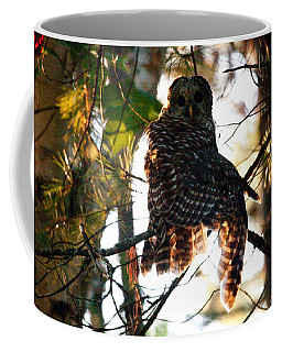 Barred Owl At Sunrise Coffee Mug