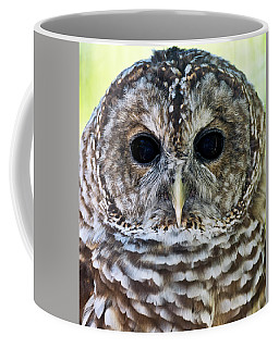 Barred Owl Closeup Coffee Mug