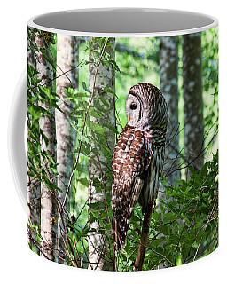 Barred Owl In The Alder Tree Forest Coffee Mug