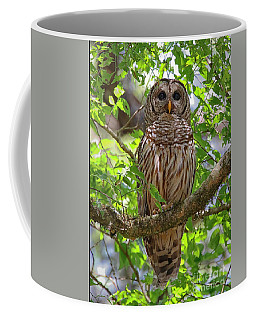 Coffee Mug featuring the photograph Barred Owl In The Branches by Myrna Bradshaw