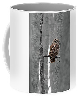 Barred Owl In Winter Woods #1 Coffee Mug