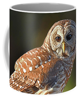 Barred Owl Intimate Coffee Mug
