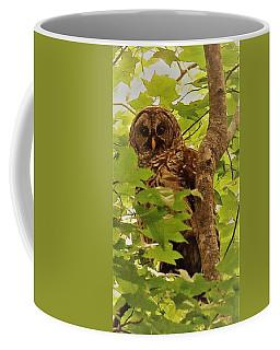 Barred Owl Coffee Mug