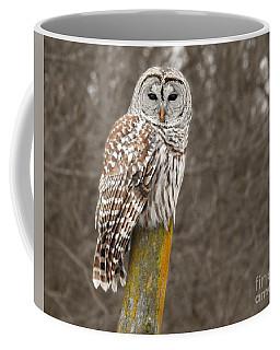Barred Owl Coffee Mug by Kathy M Krause