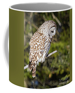 Barred Owl Listening Coffee Mug
