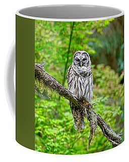 Barred Owl Coffee Mug by Michael Cinnamond