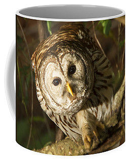Barred Owl Peering Coffee Mug