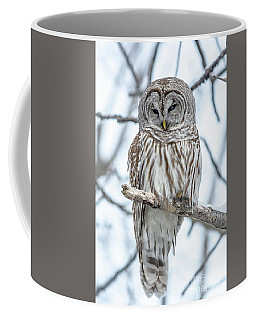 Barred Owl Perfection Coffee Mug by Cheryl Baxter