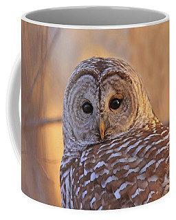 Barred Owl Portrait  Coffee Mug