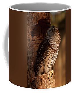 Coffee Mug featuring the digital art Barred Owl Sleeping In A Tree by Chris Flees